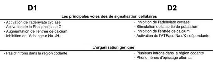 Decouverte Biologie Raie electrique ocellee diplobatis ommata additionally Decouverte Biologie Poisson merou couronne epinephelus guttatus in addition Document also Seconde also . on bio classification vertebres